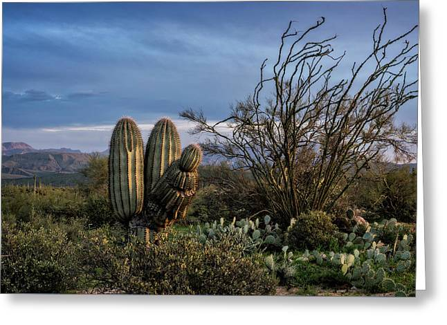 Greeting Card featuring the photograph In The Green Desert  by Saija Lehtonen
