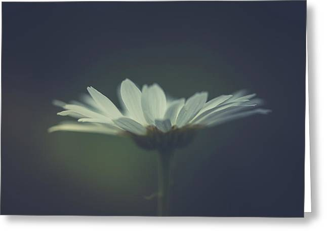 Greeting Card featuring the photograph In The Light by Shane Holsclaw