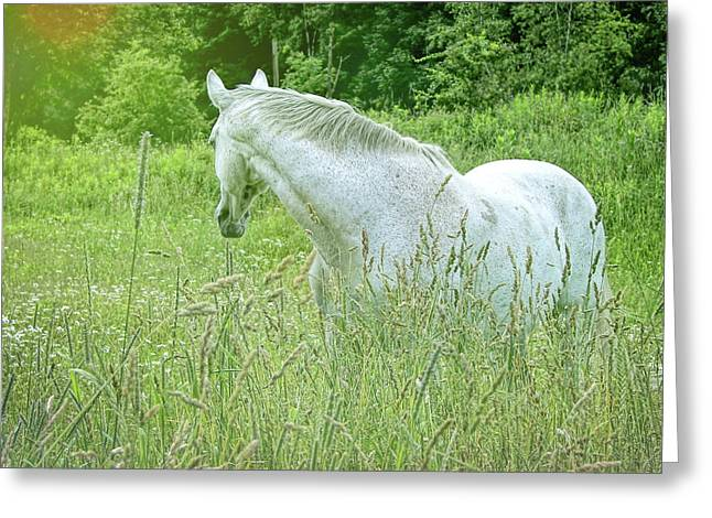 In The Meadow Greeting Card by JAMART Photography