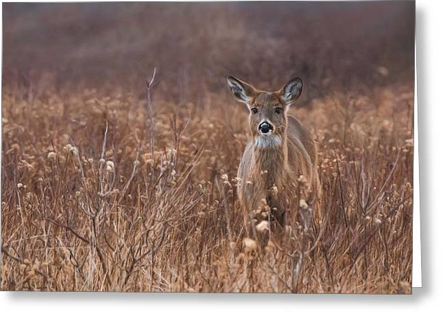 Greeting Card featuring the photograph In The Meadow by Robin-lee Vieira