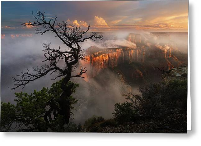 In The Mist Greeting Card by Adam Schallau