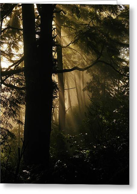 In The Mist Of Dreams Greeting Card by Jeff Swan