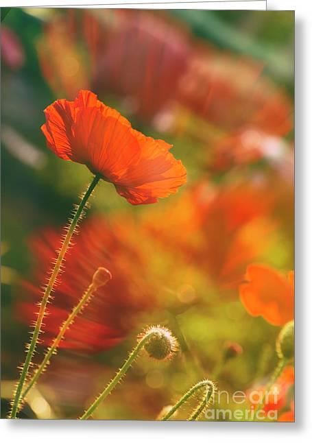 In The Morning Light Greeting Card by Veikko Suikkanen