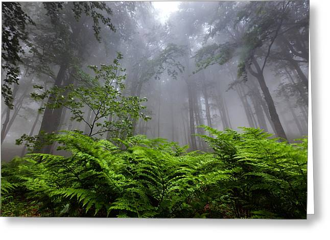 In The Murky Wood Greeting Card by Evgeni Dinev