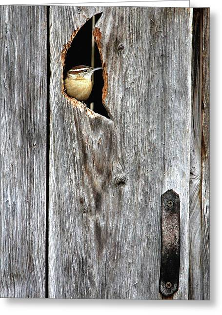 In The Outhouse Shed Greeting Card