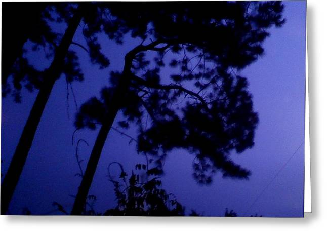 In The Pines Greeting Card by Leslie Revels