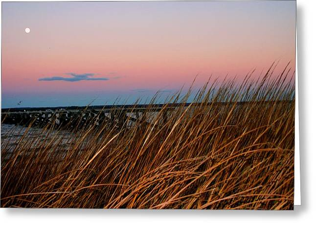 Moon Beach Greeting Cards - In the Rushes Greeting Card by Pathways Life  Coaching