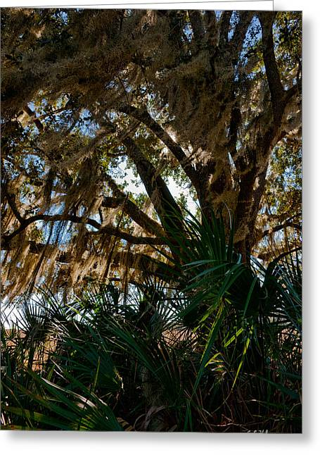 In The Shade Of A Florida Oak Greeting Card by Christopher Holmes