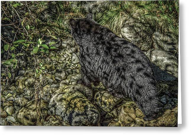 In The Shadows Black Bear Greeting Card