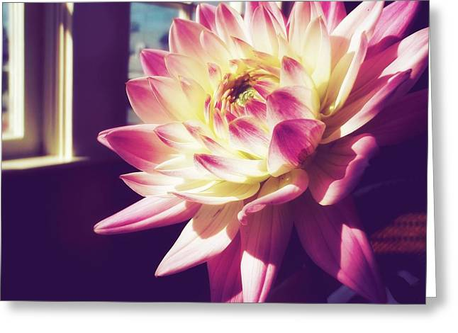 In The Sunshine Greeting Card by JAMART Photography