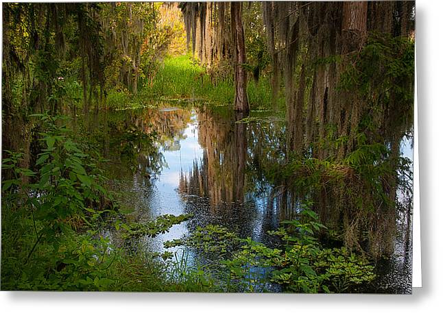 In The Swamp Greeting Card by Carolyn Dalessandro
