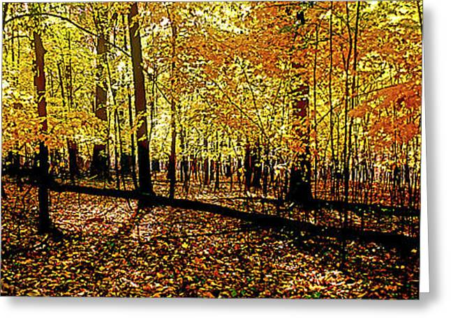 In The The Woods, Fall  Greeting Card