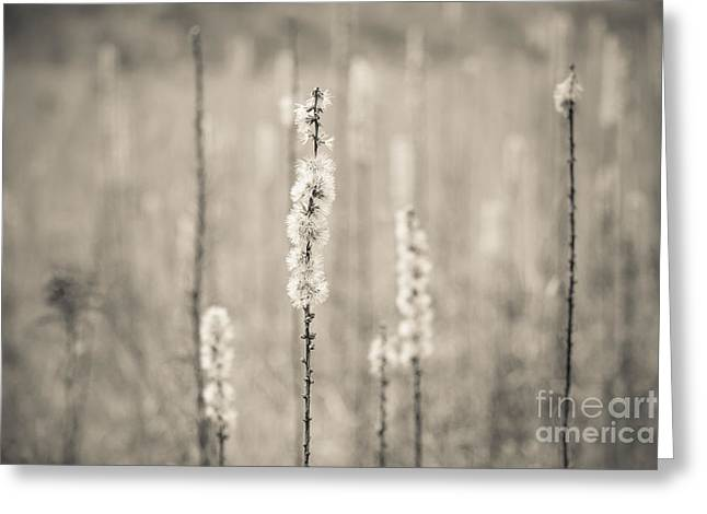 In The Wild Grass Greeting Card