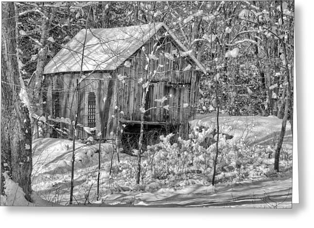 In The Woods Bw Greeting Card by Bill Wakeley