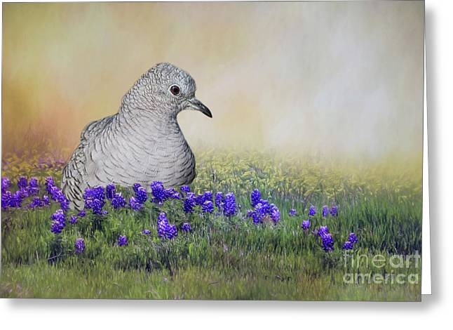 Greeting Card featuring the photograph Inca Dove  by Bonnie Barry