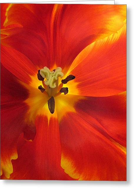 Red Petals Greeting Cards - Incandescence Greeting Card by Jessica Jenney