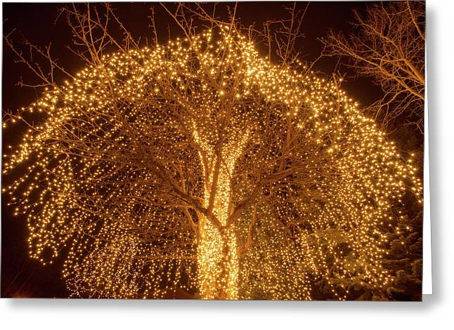 Incandescent Branches  Greeting Card