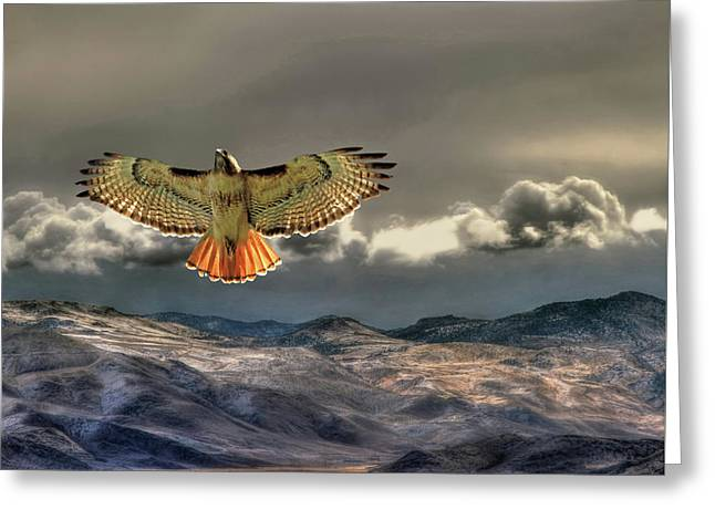 Incoming Storm Greeting Card by Donna Kennedy