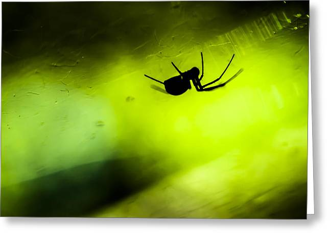 Incy Wincy Spider Greeting Card