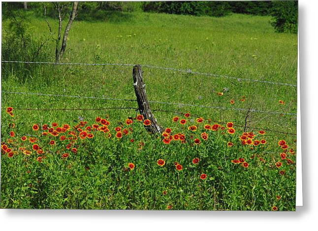 Horsemint Greeting Cards - Indian Blanket Fence Greeting Card by Robyn Stacey