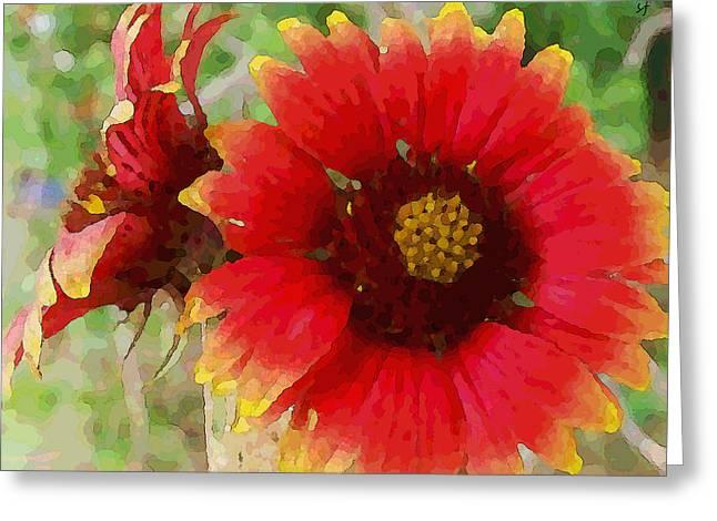 Indian Blanket Flowers Greeting Card