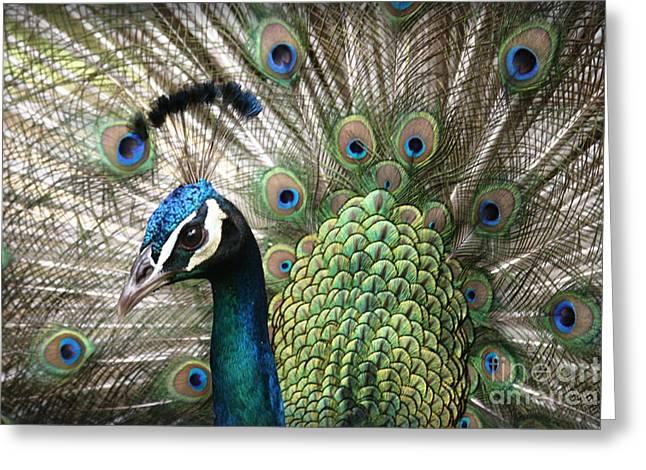 Indian Blue Peacock Puohokamoa Greeting Card by Sharon Mau