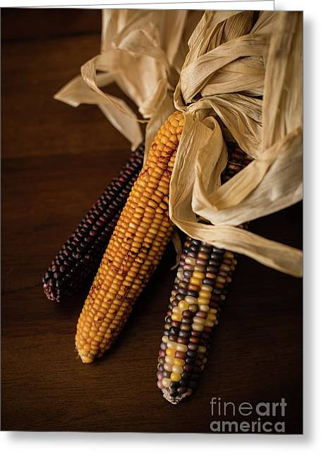 Indian Corn Harvest Greeting Card