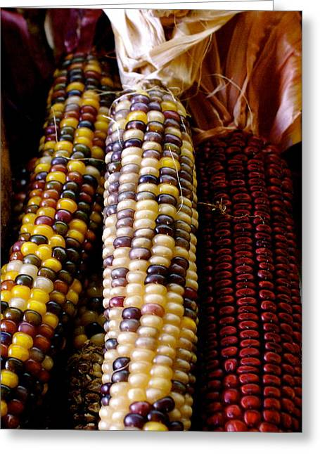 Indian Corn Greeting Card by Sonja Anderson