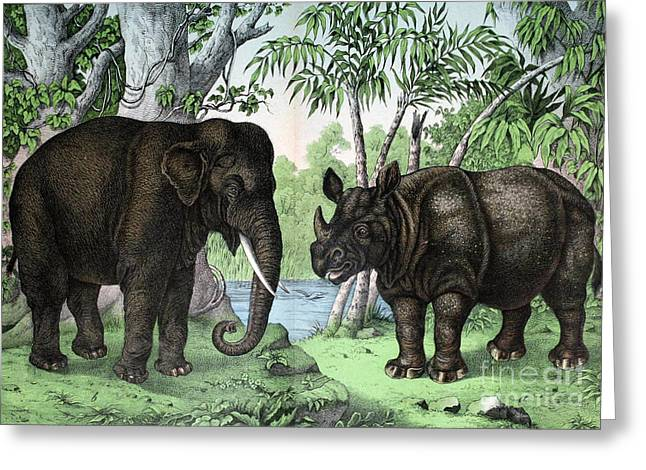 Indian Elephant And Rhinoceros Greeting Card by Biodiversity Heritage Library