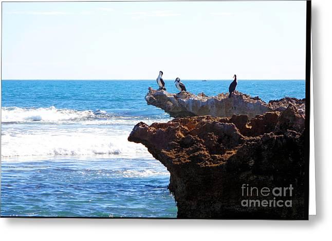 Indian Ocean Birds Resting On Rocks Greeting Card