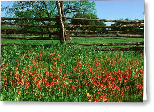 Indian Paint Brush Flowers, Lbj Greeting Card by Panoramic Images
