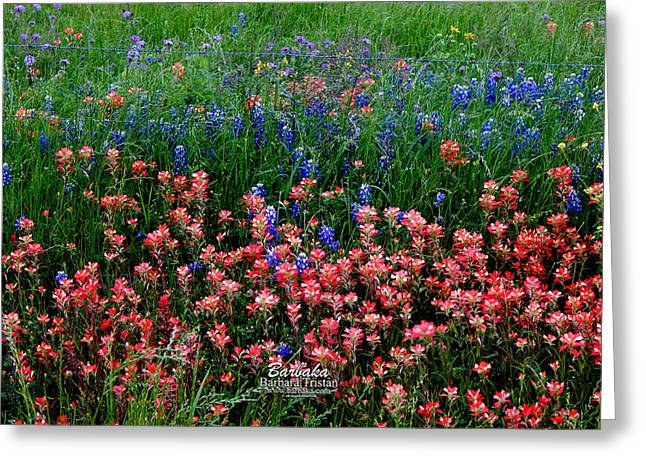 Indian Paintbrush #0486 Greeting Card