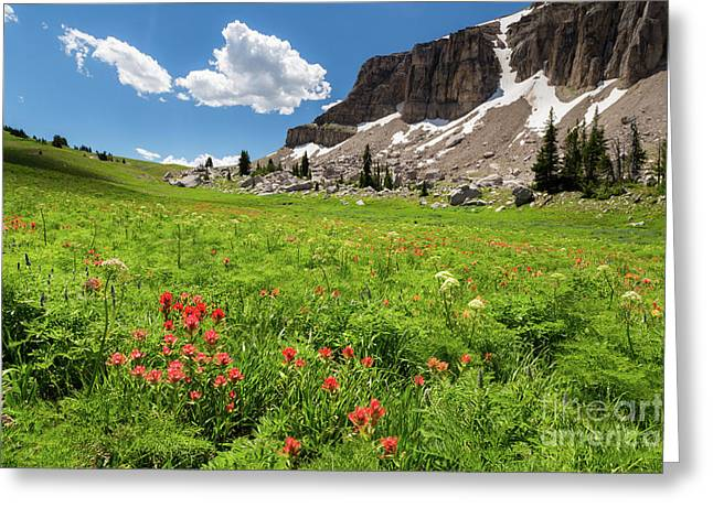Indian Paintbrush And Cowparsnip Greeting Card by Mike Cavaroc