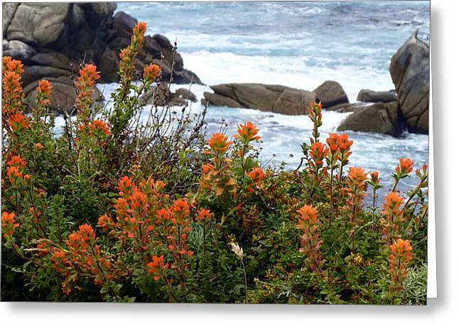 Indian Paintbrush At Point Lobos Greeting Card
