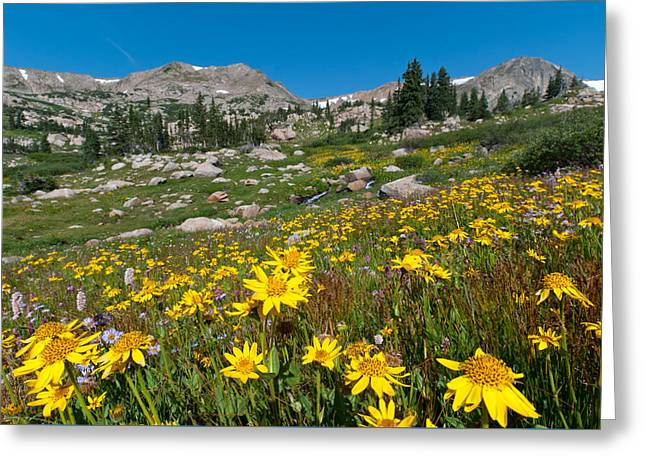 Greeting Card featuring the photograph Indian Peaks Summer Wildflowers by Cascade Colors