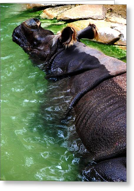 Indian Rhinoceros Greeting Card by Thea Wolff