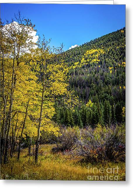 Indian Summer Greeting Card by Jon Burch Photography