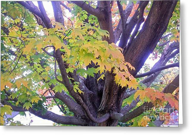 Indian Tree Greeting Card by Kristine Nora