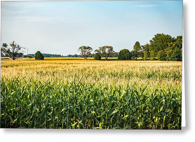 Indiana Corn Field Greeting Card