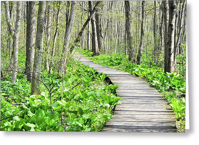 Indiana Dunes Great Green Marsh Boardwalk Greeting Card