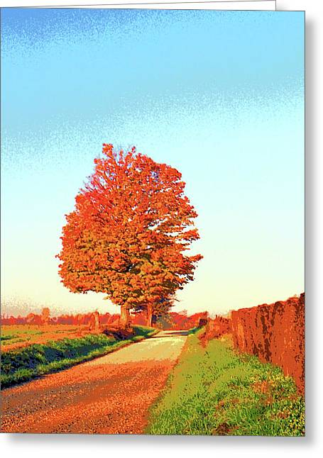 Indiana Sugar Maple Image Greeting Card by Paul Price