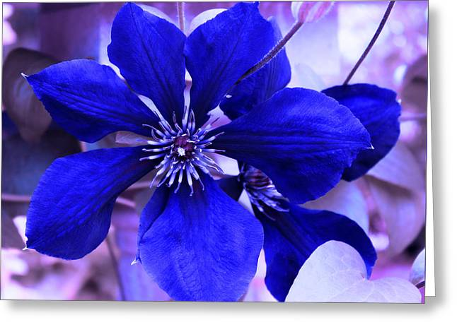 Greeting Card featuring the photograph Indigo Flower by Milena Ilieva