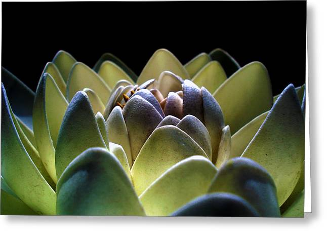 Indonesian White Lotus Greeting Card