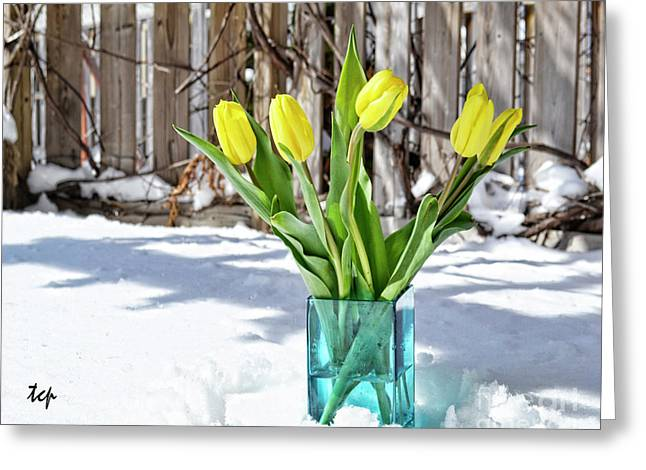 Greeting Card featuring the photograph Indoors Out by Traci Cottingham