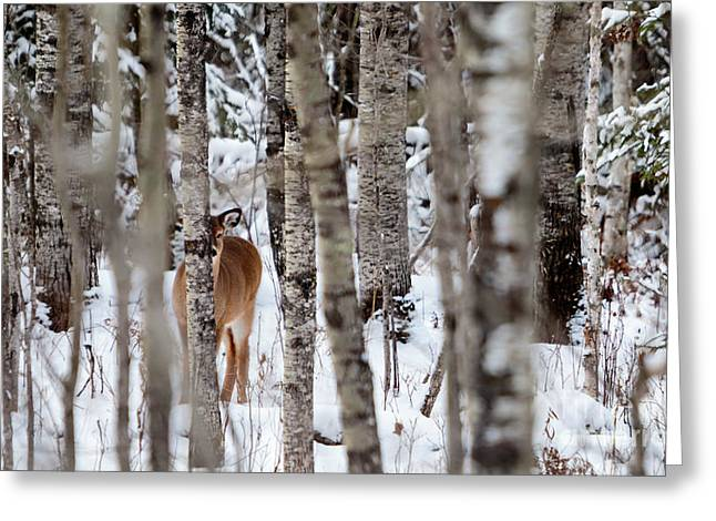 Indus Fawn Greeting Card