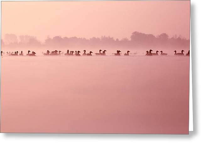 Infinity - Geese In The Mist Greeting Card by Roeselien Raimond