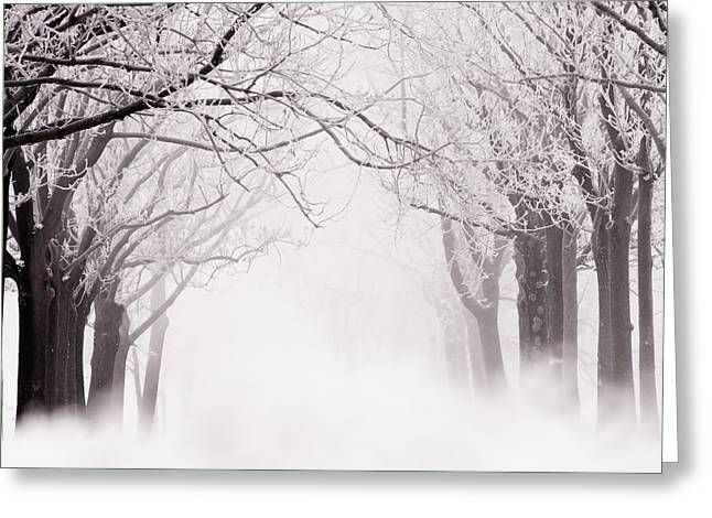 Infinity - Trees Covered With Hoar Frost On A Snowy Winter Day Greeting Card by Roeselien Raimond