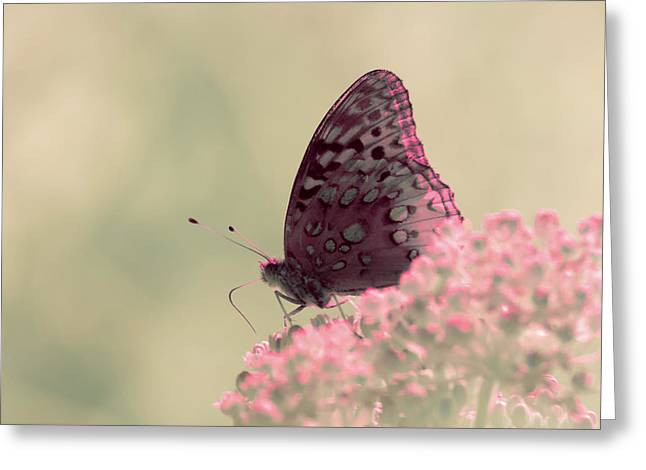 Greeting Card featuring the photograph Infrared Fritillary 2 by Brian Hale