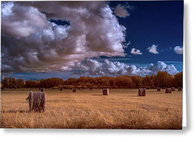 Infrared Haybales Greeting Card