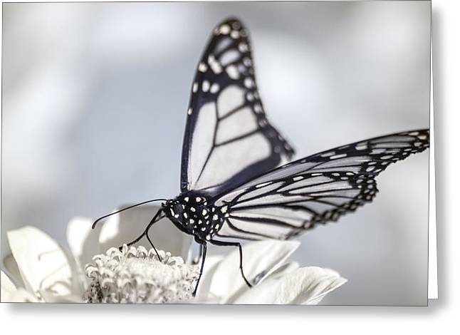 Greeting Card featuring the photograph Infrared Monarch 2 by Brian Hale